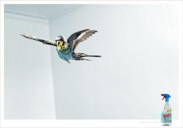 Bird61_25